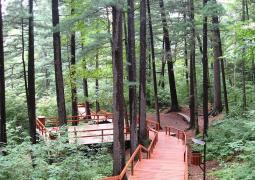 点击打开景区内景点:地下森林的详细介绍…