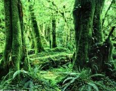 点击打开景区内景点:原始森林的详细介绍…