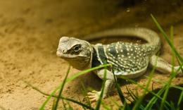 点击打开景区内景点:两栖爬行动物馆的详细介绍…