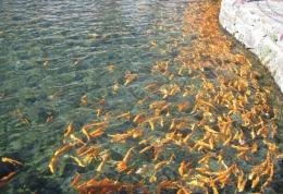 点击打开景区内景点:金鱼池的详细介绍…