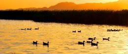 点击打开景区内景点:野鸭湖湿地公园的详细介绍…