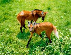 点击打开景区内景点:野生动物世界的详细介绍…