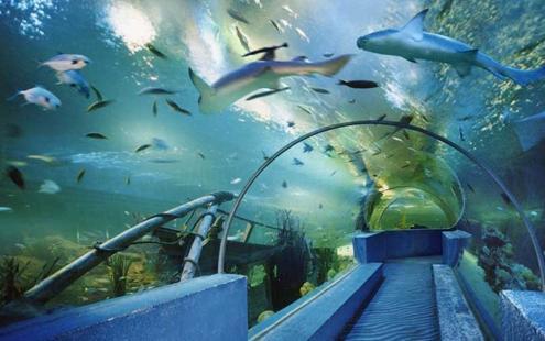 北京动物园海底隧道